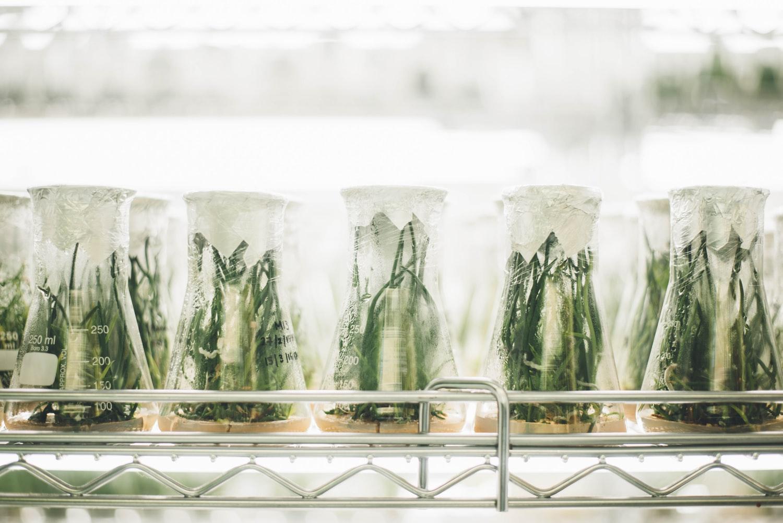 Bioeconomia: a base de um futuro sustentável? - Trendcetera